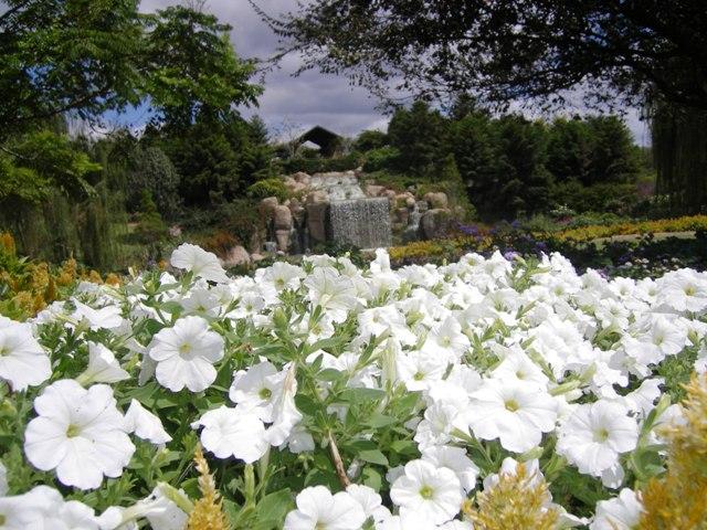 flower-landscape.jpg